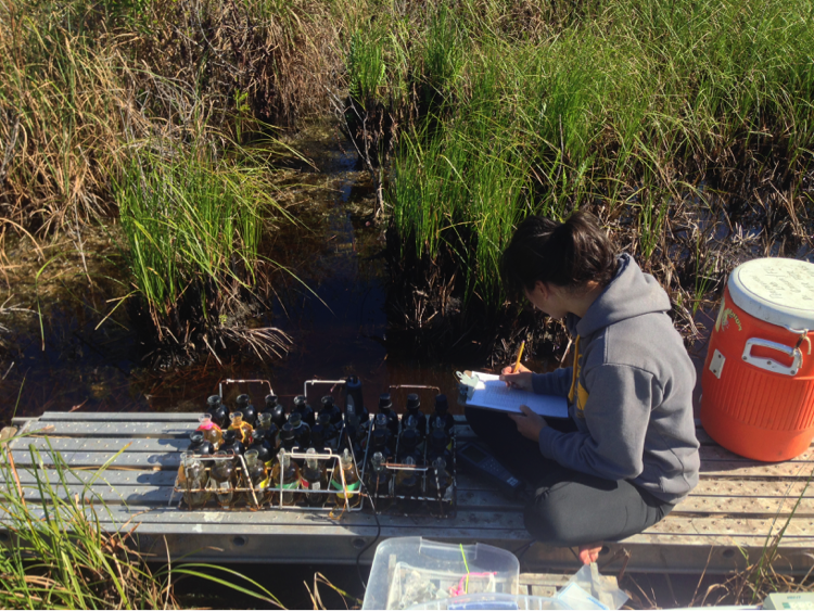 Viviana Mazzei studies algae in Everglades.